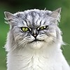 lady-croi-tine-dubh's avatar