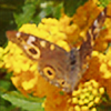 LadyCrystal6's avatar