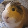 LadyJunina's avatar
