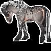 Laemiri's avatar