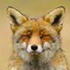lars314's avatar