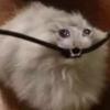 lasagnafeline's avatar