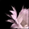 lasiliekki's avatar