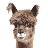 latexllama's avatar