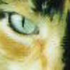 Laurkin's avatar