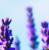LavenderGlory's avatar