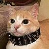 LazerCore26's avatar