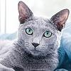 Leafdash's avatar