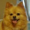 LeatherHearts's avatar