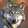 Leethetimberwolf's avatar