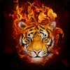 Legendary-Tiger's avatar