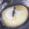 LeKitty's avatar