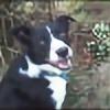 lemonlady1991's avatar