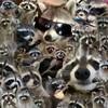 Leonfreak17's avatar
