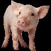 LeoTheLupine's avatar