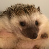 lepertron's avatar