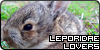 Leporidae-Lovers