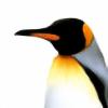 LFJG's avatar