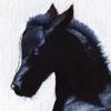 LiberaEqua's avatar