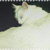 Lichess's avatar