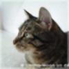 Lici200's avatar