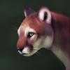 Liiris's avatar