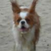lilbet's avatar