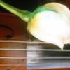 Lilies3's avatar