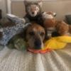 liliinette's avatar