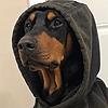 LilPitBull's avatar
