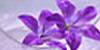 LilyAdopt's avatar
