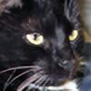 LilyKitty7488's avatar