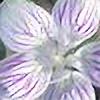 lilymichelle's avatar