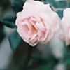 Lilysphotolv's avatar
