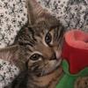LinkaLinxs's avatar