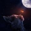 Linkward's avatar