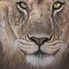 lionwolf66's avatar