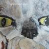 lisapencil's avatar