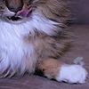 lisegathe's avatar