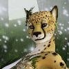 Listo81's avatar