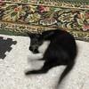 littlemisfitcat's avatar