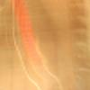 LittleSilverBones's avatar