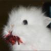 LivyBunny14's avatar
