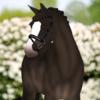 Lk-drawinggs's avatar