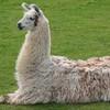LlamaAndWatch's avatar