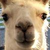 llamalover4132's avatar