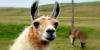 LlamaSmugglers's avatar