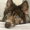 Lobbomorro's avatar