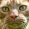 loezzy's avatar
