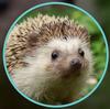 LoganPasion's avatar